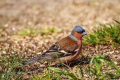 Vogels fotograferen bij Bart Stornebrink