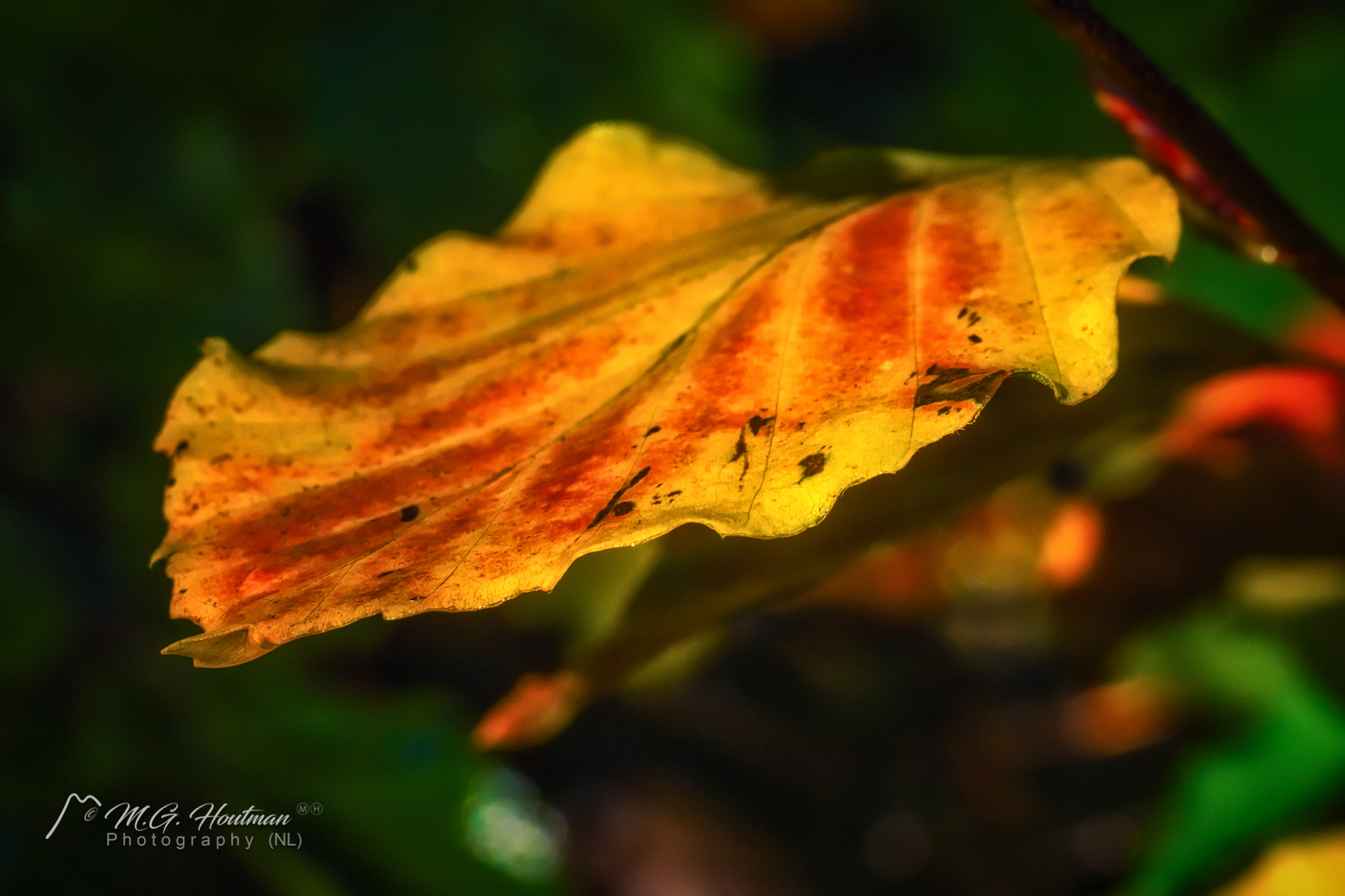 Leave the leaf