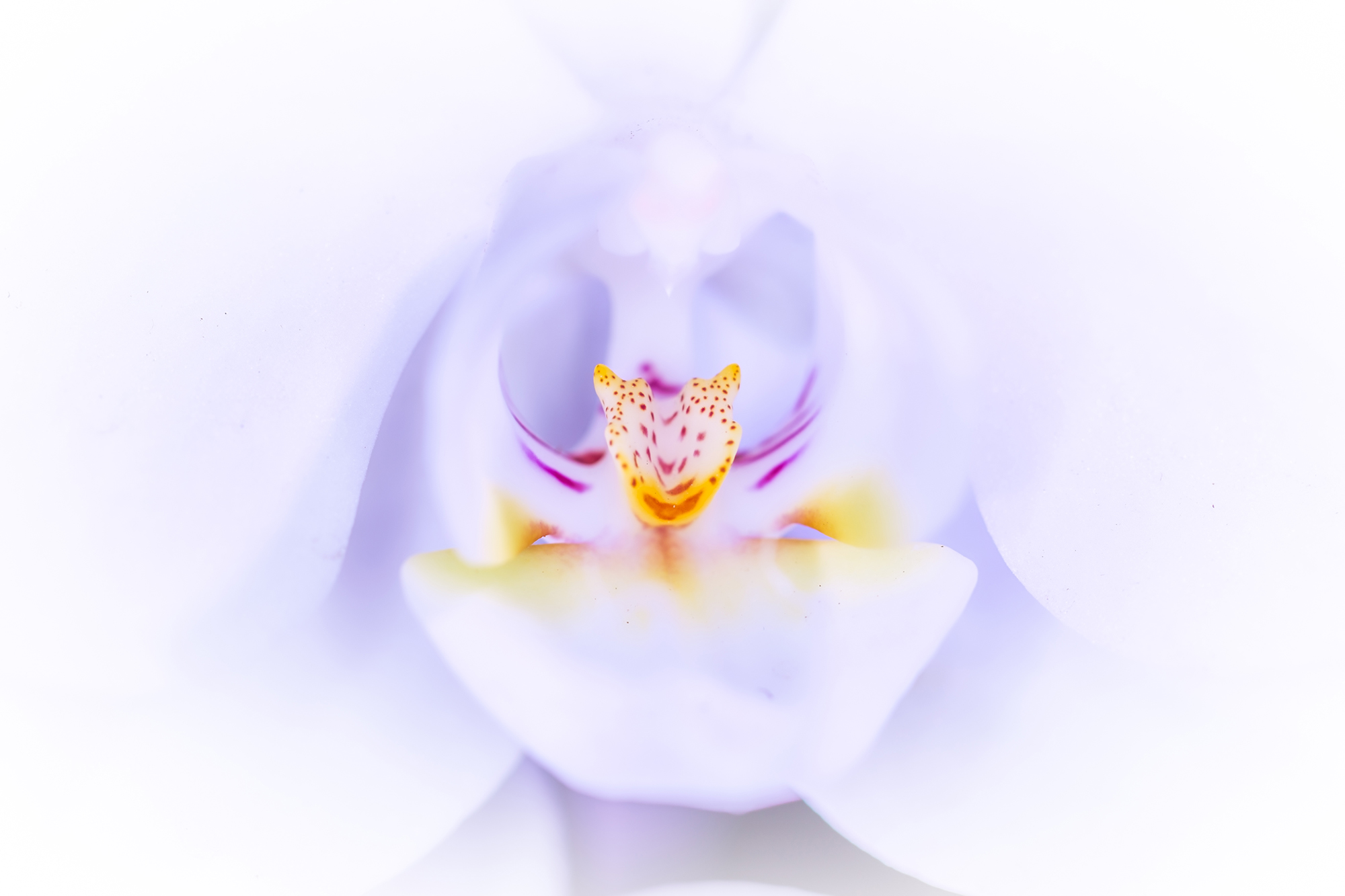 White Orchid!
