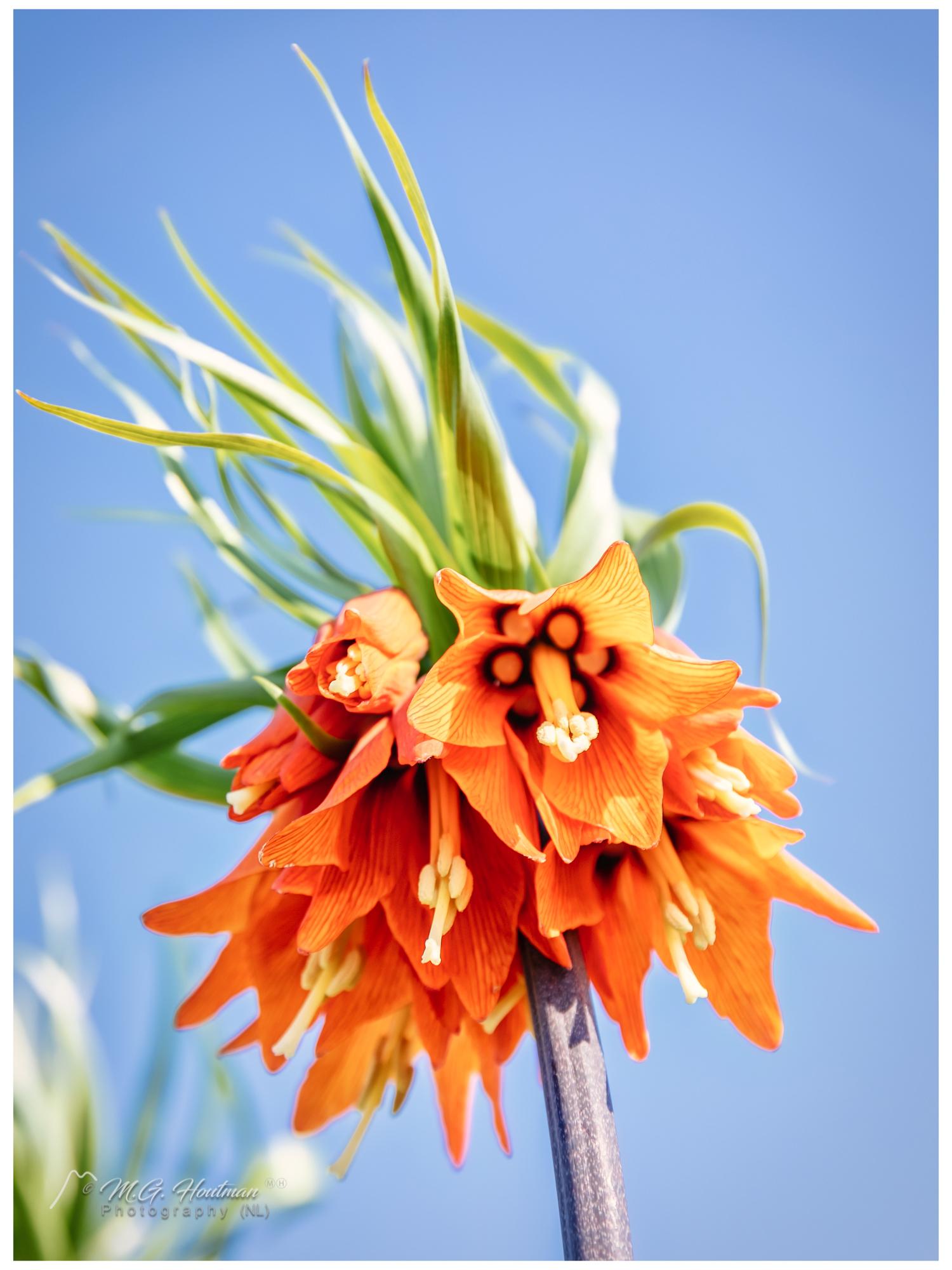 Orange flower chalice