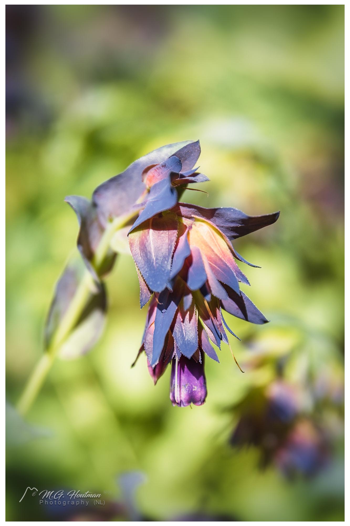 Flower in Inverewe Gardens
