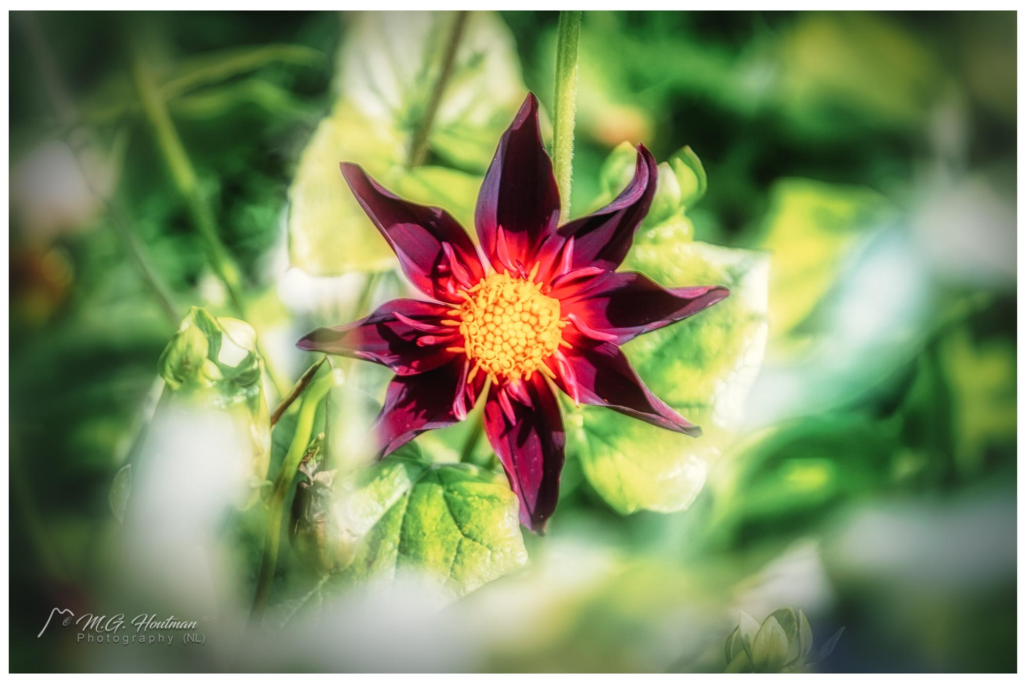 in a botanical garden