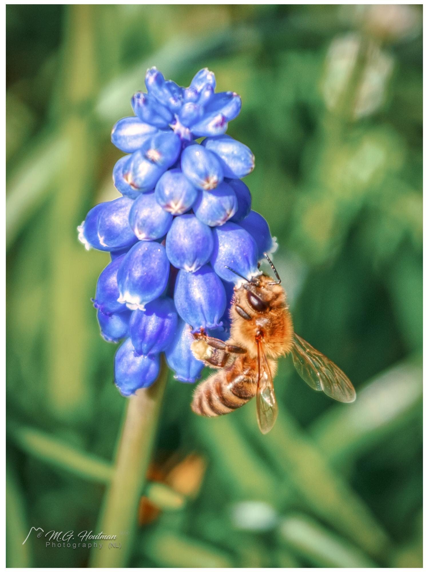 honey on demand