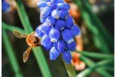 Bee on Blue