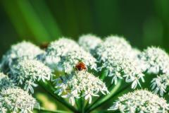 Bee in acton