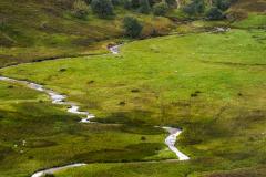 Great Glen - Highlands - Scotland (UK)