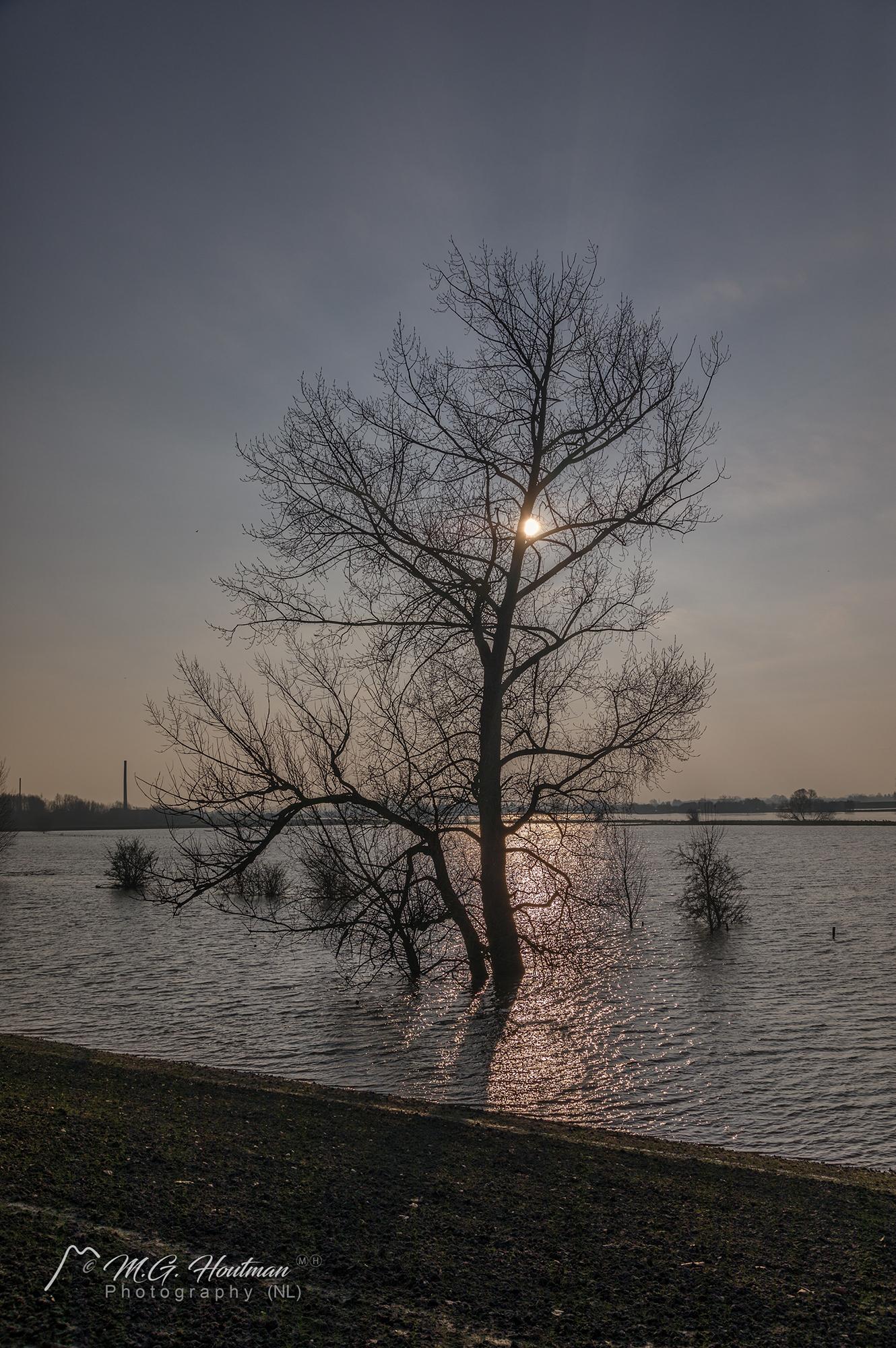 Eenzame boom in de uiterwaarde