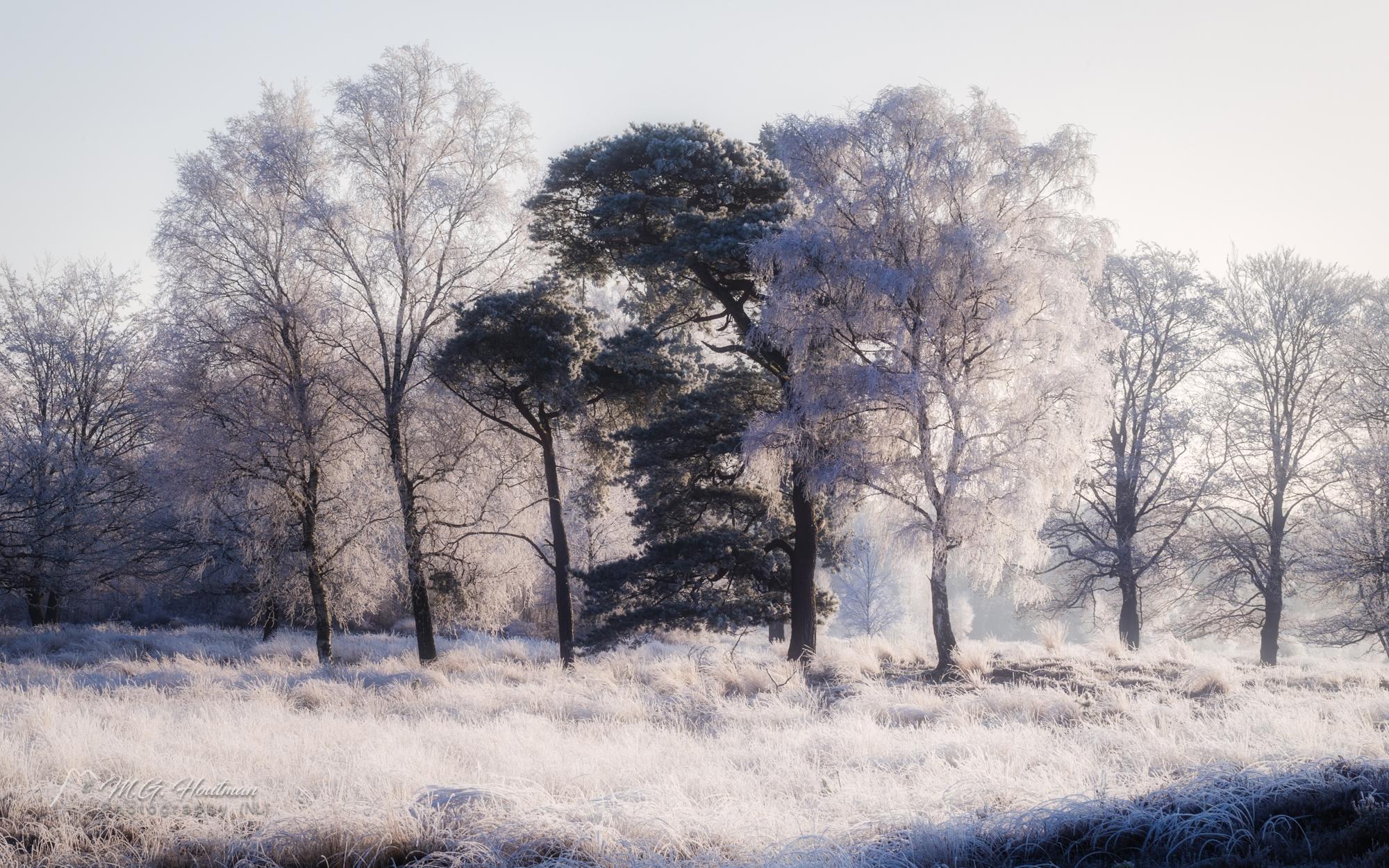 Nationaal Park Utrechtse Heuvelrug. Bos, heide en vennen
