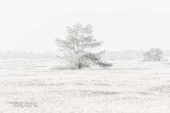 Tree @ Nationaal Park De Hoge Veluwe