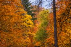 Mooie herfst in het bos