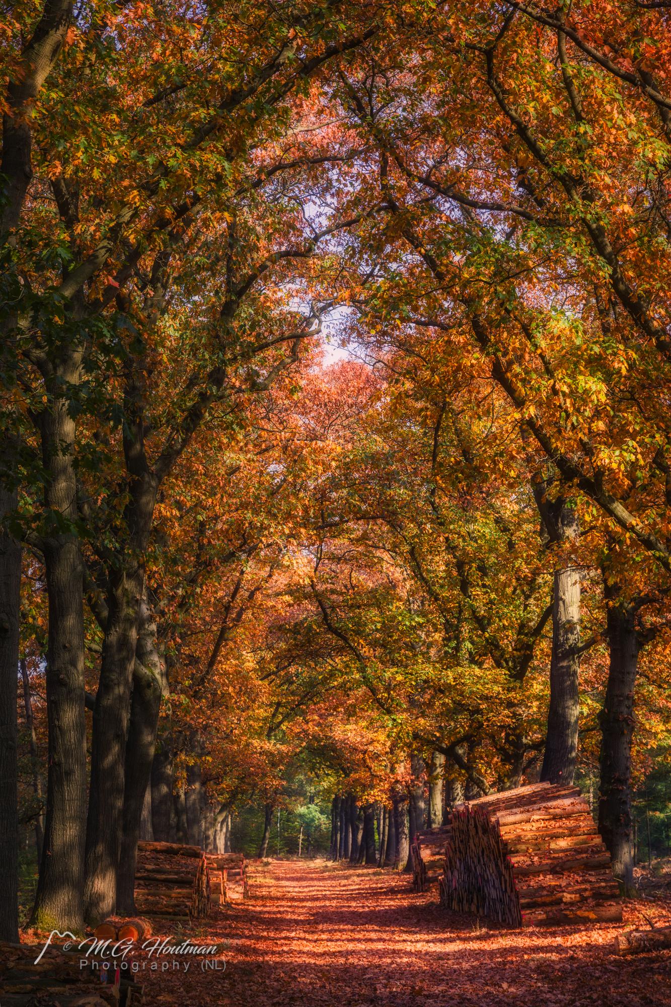 Autumn in National Park Hoge Veluwe