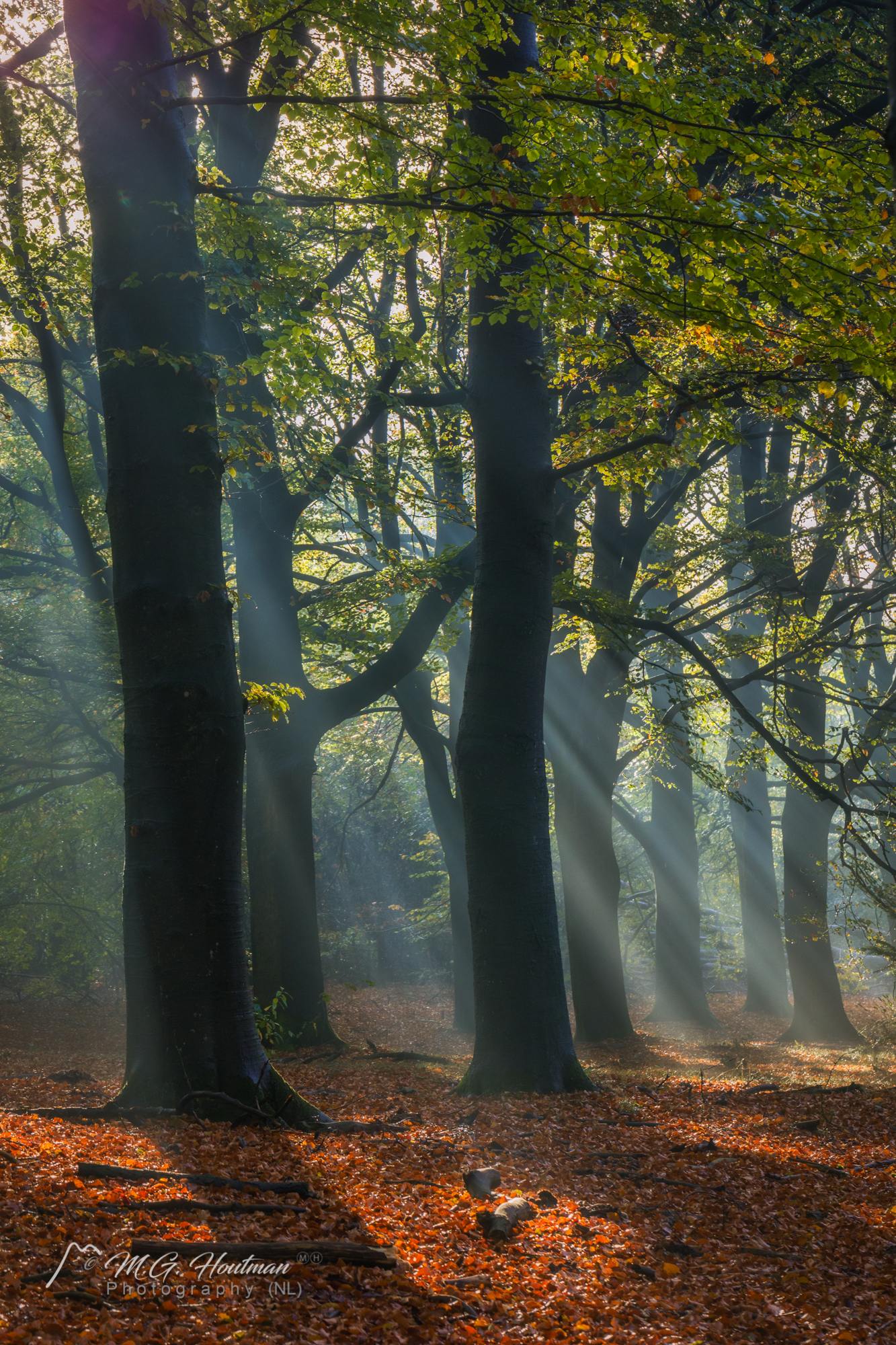 When the sun wakes up in the forest